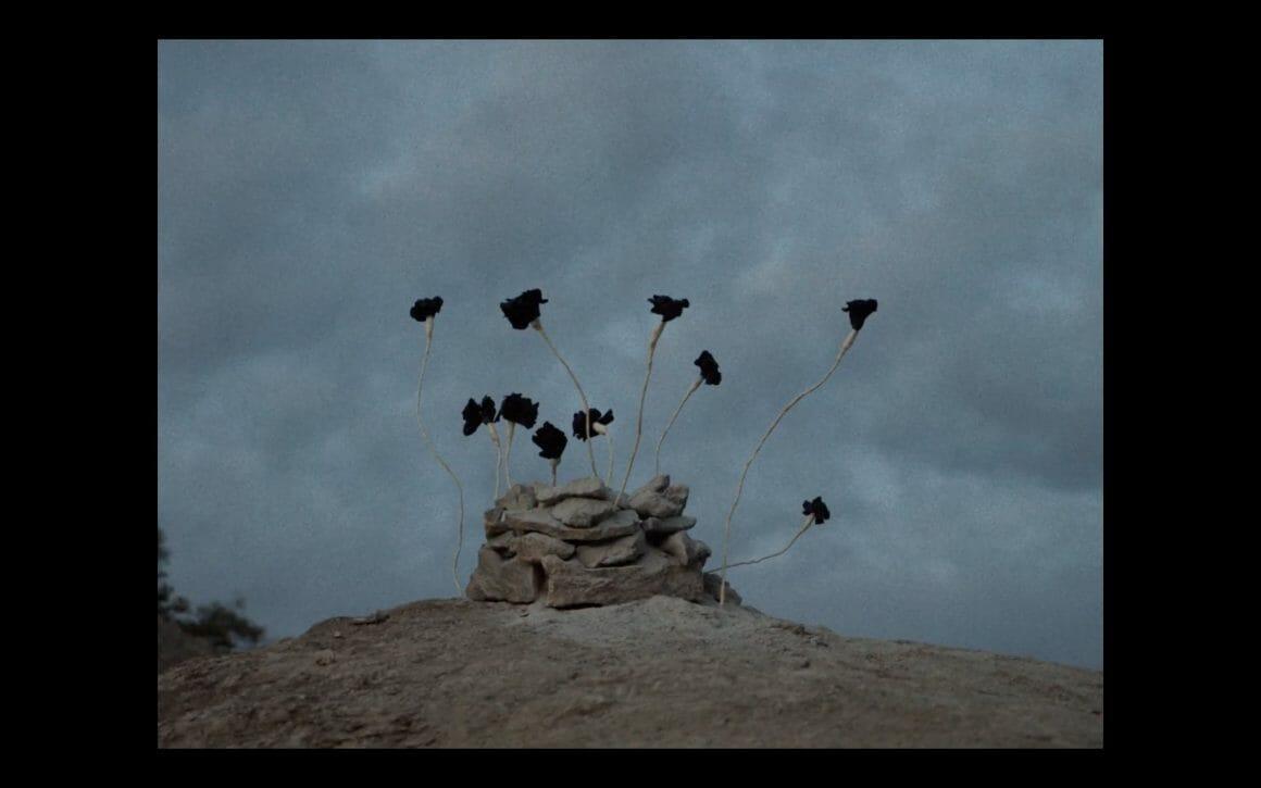 Roses noires qui poussent des pierres