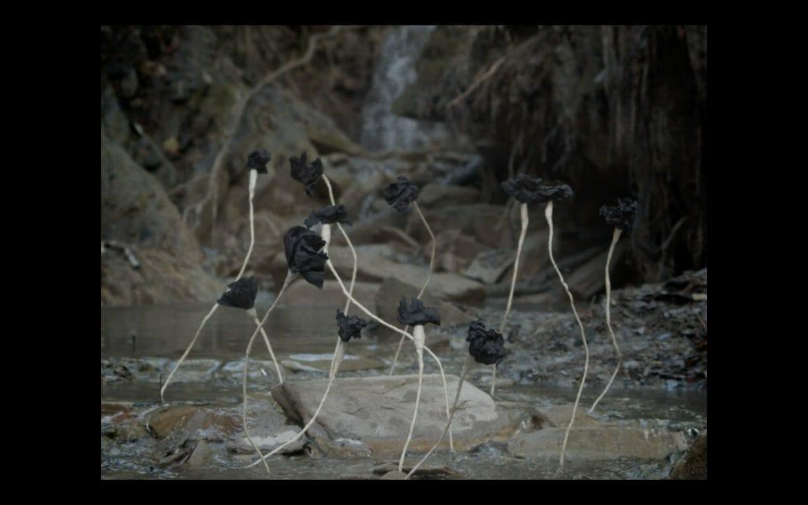 Roses noires qui poussent des eaux
