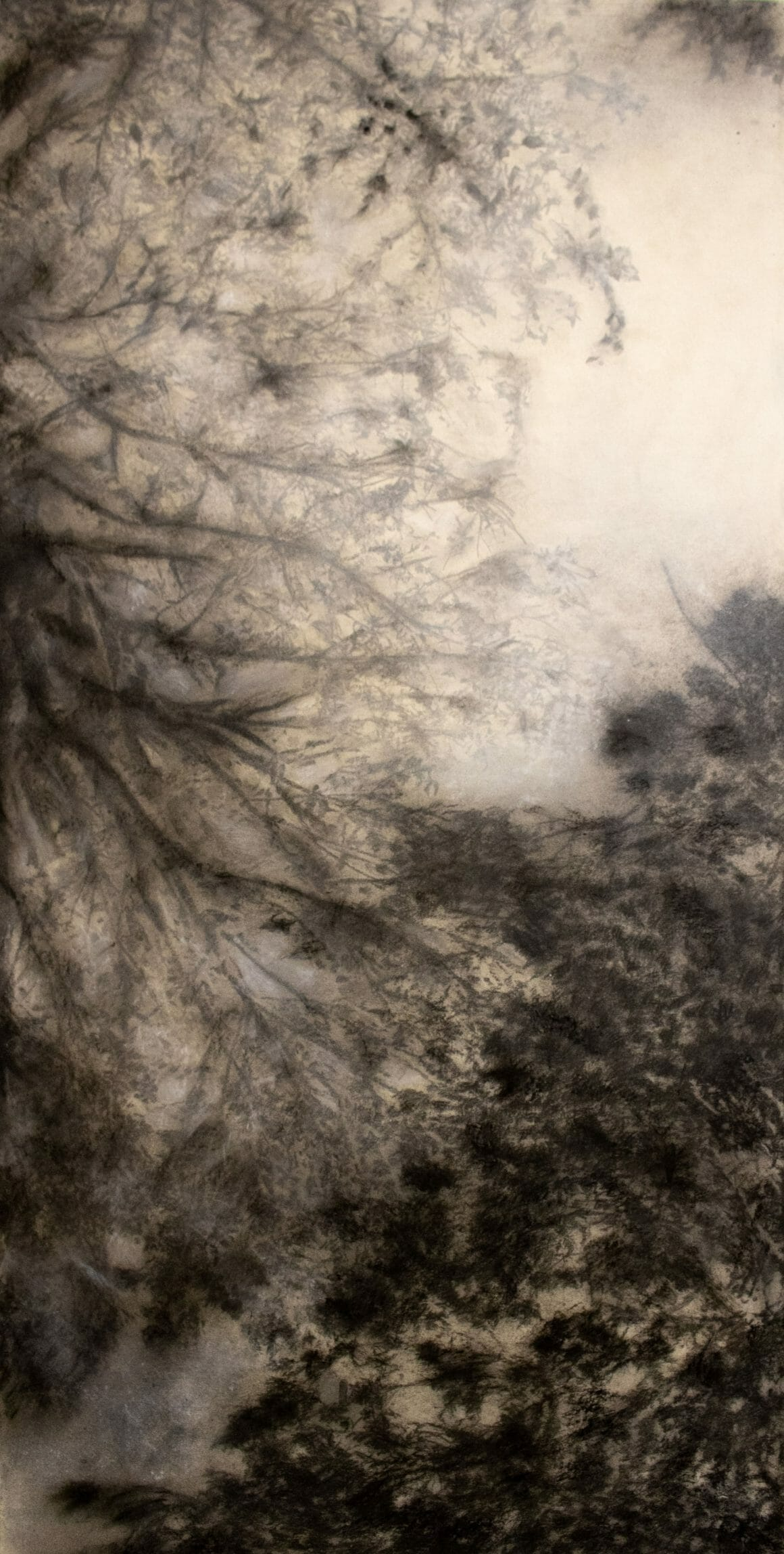 Feuilles d'arbres en noir et blanc