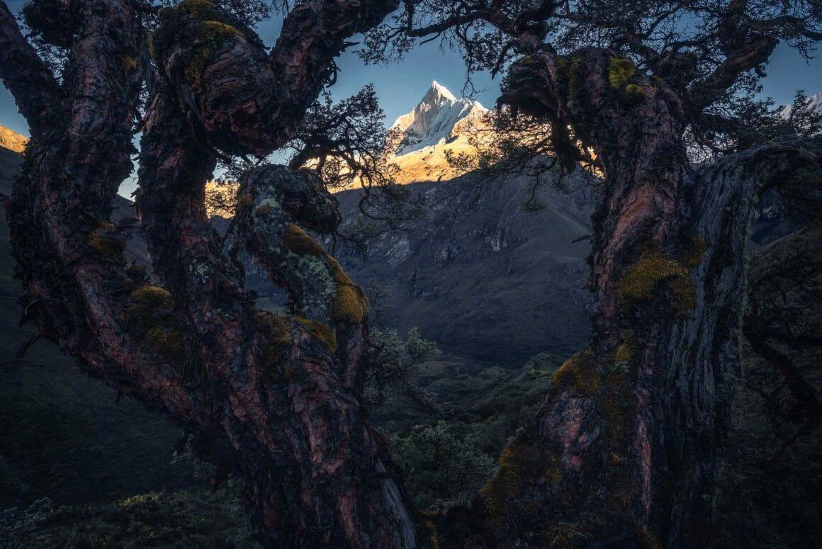 Deux arbres recouverts de mousse forment un cadre au sein duquel on observe une montagne à l'ombre. Le pic enneigé est illuminé par les premiers rayons de soleil.