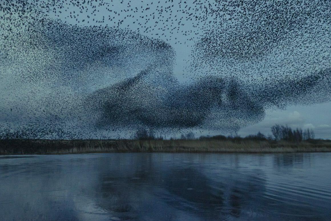 image de la migration capturée par Søren Solkær