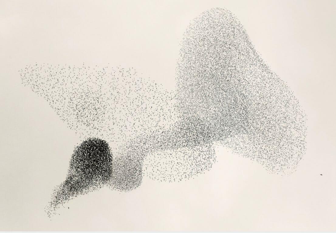 Le photographe a capturé cette image de migration d'oiseaux au Danemark murmuration