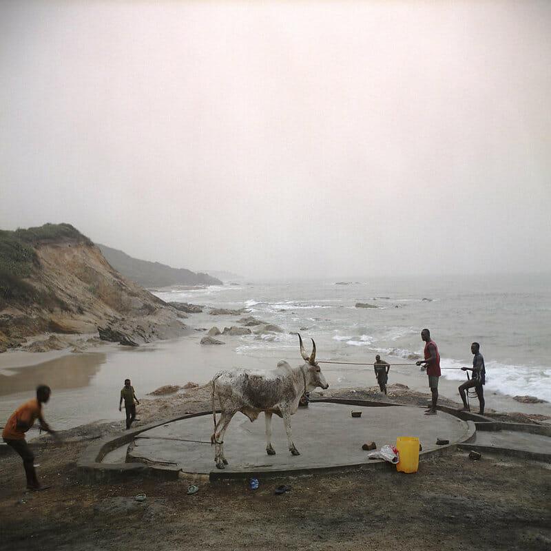 Photographie de ghanéens qui lavent une bête.