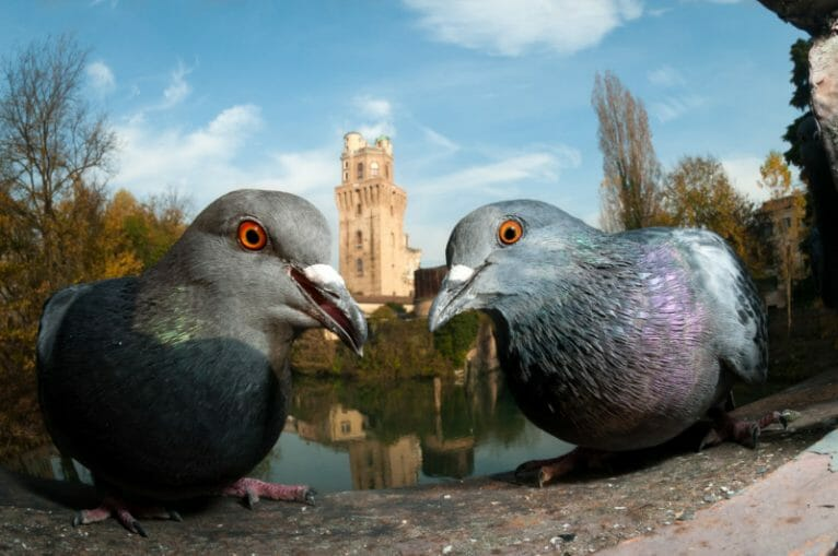 Bird Photographer 2021 The Guardians Paolo Crocetta