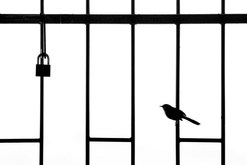 Bird Photographer 2021 Lockdown William Steel